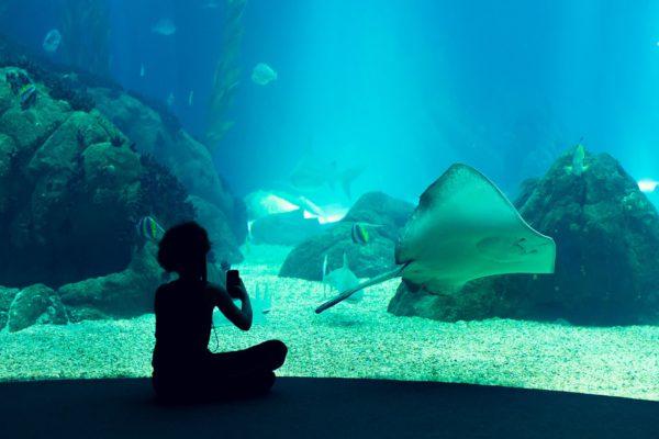 В столице строят подземный океанариум