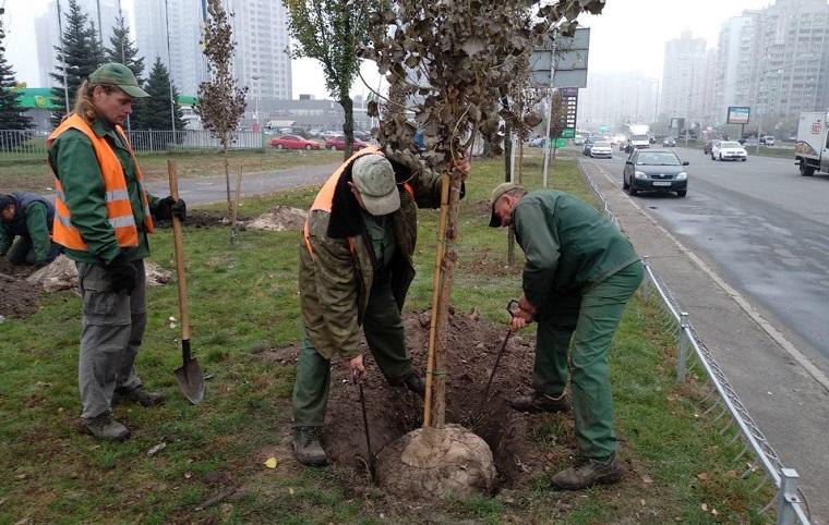 На Днепровской набережной высадили аллею из тополей
