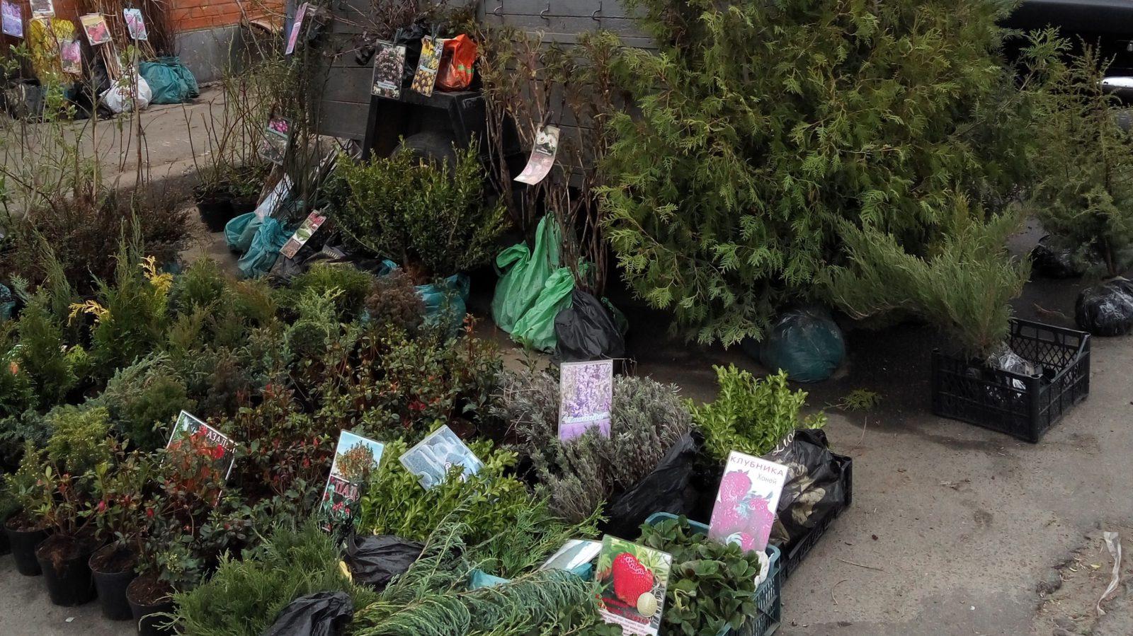В Киеве воруют кусты и деревья