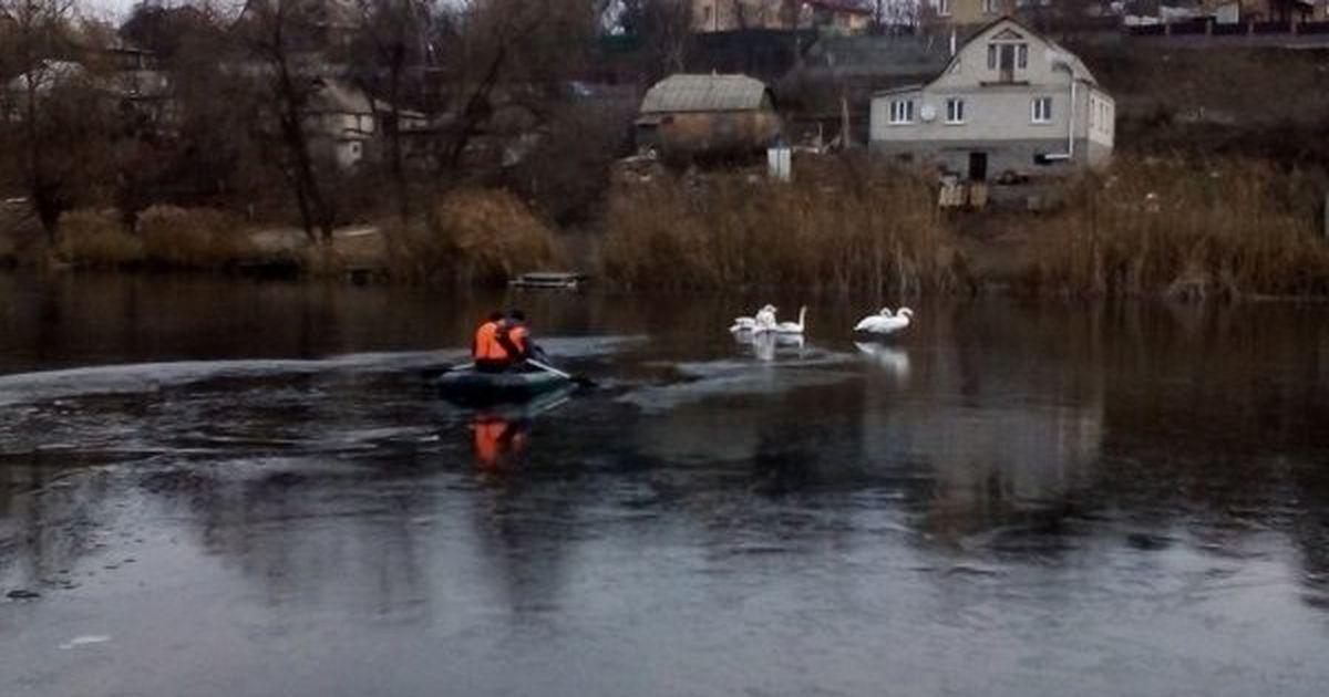Под Киевом пожарные спасли примерзших ко льду лебедей