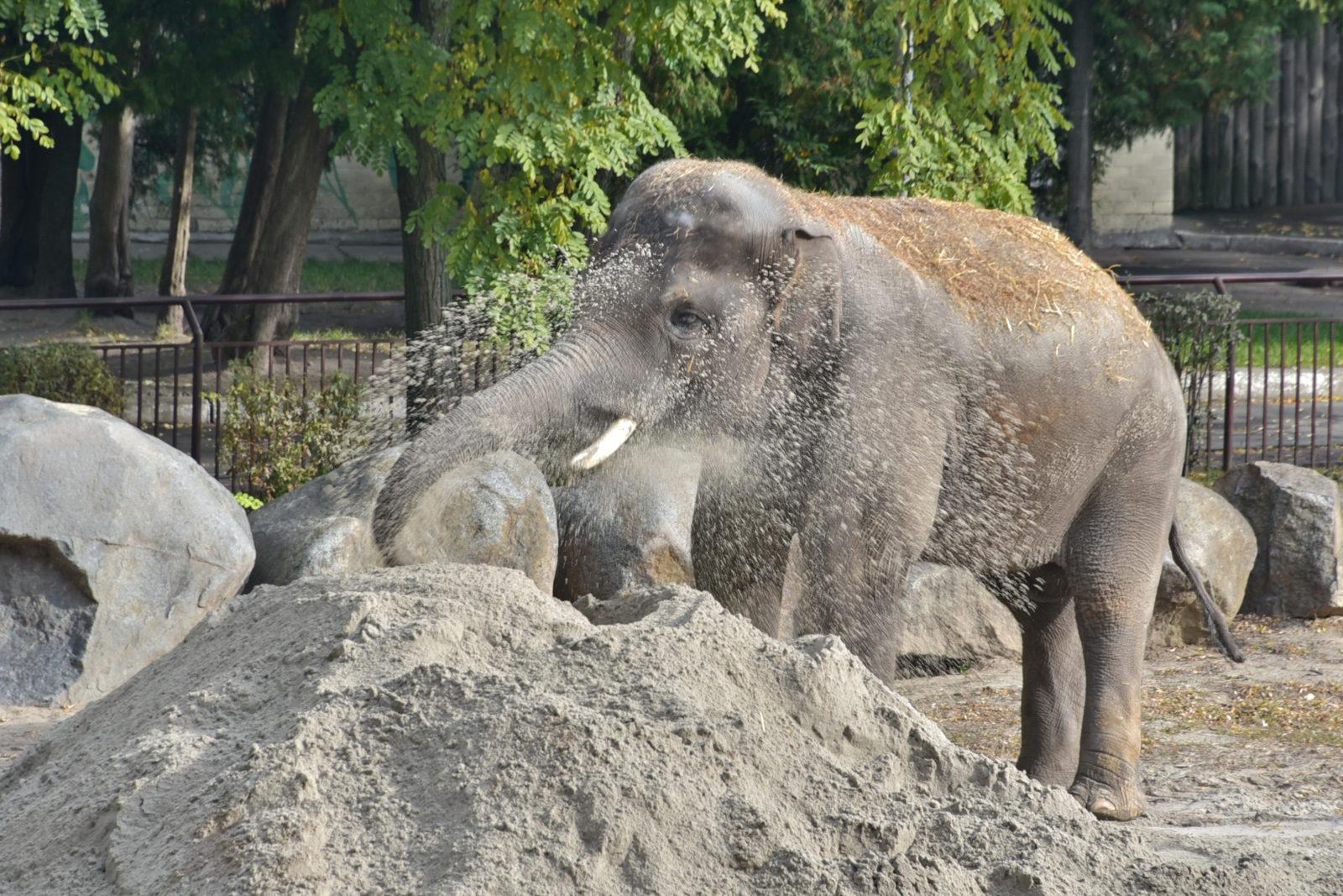 Слон из Киевского зоопарка отпраздновал День рождения